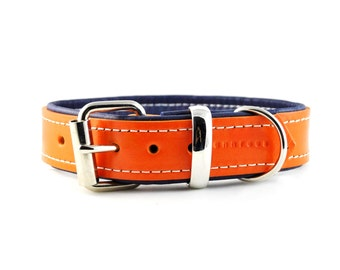 Orange on Navy Blue Dog Collar - Padded Leather Buckle Collar - Handmade to Order