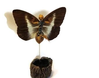 Gothic Fairy - Creepy Decoration for your Cabinet of Curiosities! Oddity, dead specimen, weird art