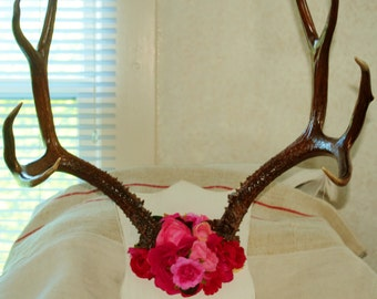 Deer horns mounted with flowers.