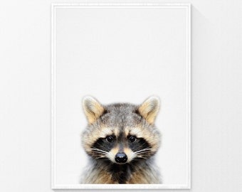 Baby animal nursery art, Raccoon Print, Baby animal prints, Woodland Animals, Nursery animal prints, Animal Photography, Nursery prints