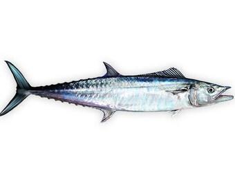King Mackerel Decal - Kingfish Decal - King Mackerel Sticker
