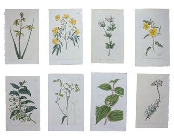 Pair of Eight Green and Yellow Botanical Prints Vintage