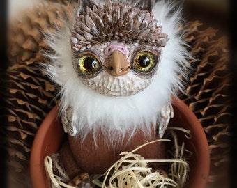 Kind owl
