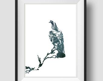 Pigeon Bird,Pigeon Art, Animal Wildlife Art, Animal Art, Nature Art, Animal Art