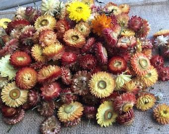 Dried Strawflower heads (orange/yellow tones)