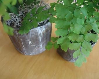 Natural looking Round Pot Set (1 Medium and 1 Small)