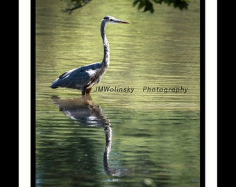 WADING,water,he,n,bird,feather,pond,lake,reflection,outdoors,decor,thornton,brinton,egret,green,leaves,black