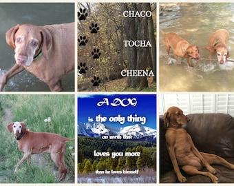 Collage Photo, Pet Friend Personalized Canvas, Your Pet on Canvas with Quotes, Custom Pet Portrait, Best Friend Gift Idea, Dog Photo