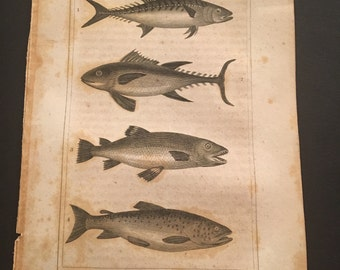 1823 Fish of the Freshwater Type, Antique Copperplate Engraving by Oliver Goldsmith
