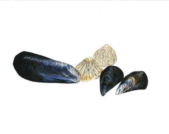 Cornish Seashells Giclee Print A3