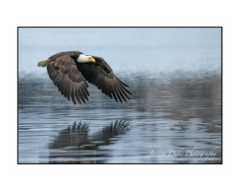 Bald Eagle Photography, Wildlife Photography, Alaska Art, Nautical Photography, Bird Photography, Nature Photography, Ready to Frame Art