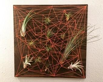 Air Plant Display String Art - Abstract Web