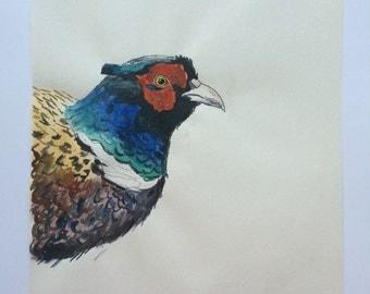 Original watercolour drawing of pheasant