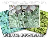 Succulent Plants Clip Art Photos | Scrapbooking Background Images | Instant Download | Small Business Commercial Use | Plants01