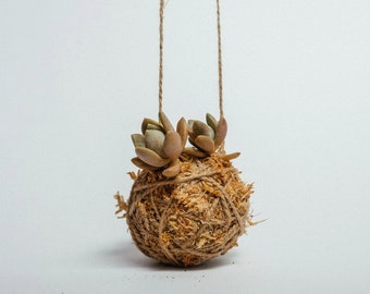 Hanging Kokedama with cute pair of succulents - Handmade in Sydney