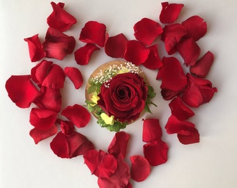 Preserved Rose in glass cloche