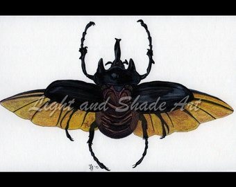 6x9in. - Beetle - Ink & Colored Pencil Print