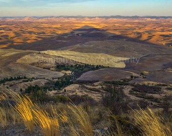 Harvest Fields in the Shadow of Steptoe Butte : Fine Art Photography