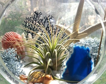 Large Hanging Air Plant Terrarium Kit Beach Terrarium Kit Seascape Terrarium Kit Large Glass Globe Beaded Hanger Birthday Gift Thank You