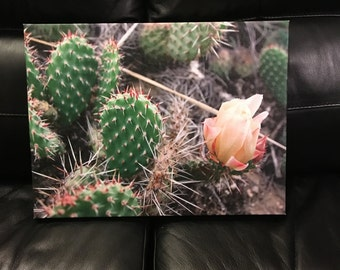 Cactus Gallery Wrapped Canvas