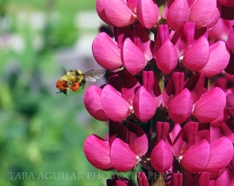 Flower Photo, Photo Print, Insect Photos, Bee Photos, Wall Art, Home Decor, Colorful Photo Print, Nature Photos, Pink Flower Photos