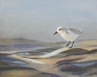 Solitary Sandpiper (Sanderling)