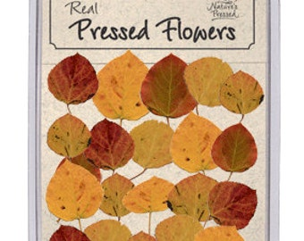 Real Pressed Dried Fall Aspen Leaves - 20 piece pack