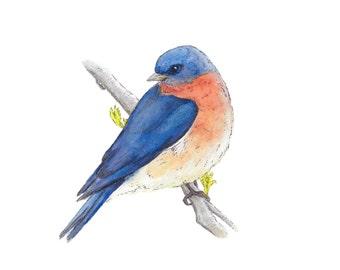 Watercolor Bird, Archival print, Blue Bird