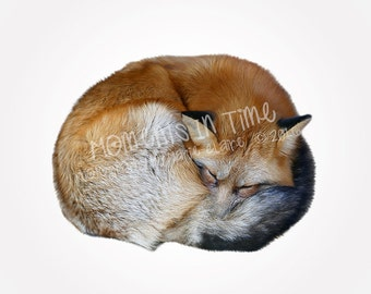 Moments In Time Fox Curled Up Animal Overlay