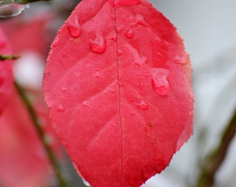 Winter Leaf, colour photo of a leaf in the winter with raindrops,wall art photo print