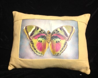 Butterfly (Common Pink Forrester) Pillow