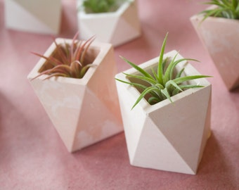 Square Geometric Planter with Airplant