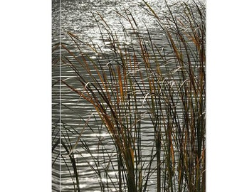 Autumn Reeds canvas print