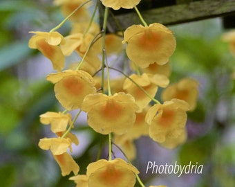 Nature Photography - Yellow flower photo