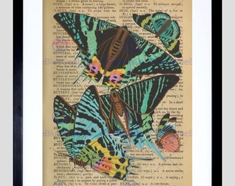 Upcycle Dictionary Butterflies Insect Bright Framed Art Print Poster F12X10553