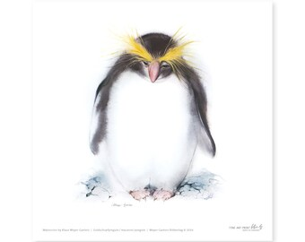 Penguin fine art print, watercolor, 8,3 x 8,3 inch, limited edition, painted by Klaus Meyer-Gasters
