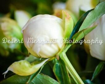 Flower Nine