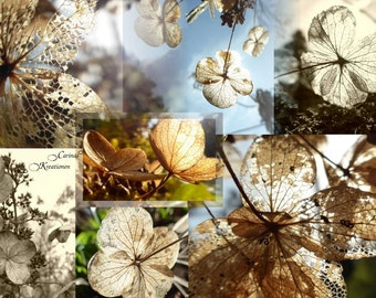 Picture photo collage hydrangeas in the autumn of JPG file