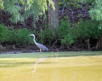 Original Photography, Heron On The Pond, Landscape, Water Scene, Visual Art