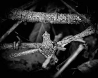 Frog in the Woods