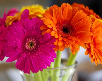 Colorful Daisies, Flower Photography, vibrant colors, flower art, wall decor, home decor, orange and pink, bathroom art