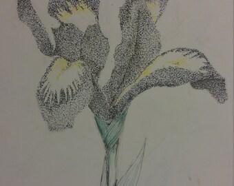 Lily Print