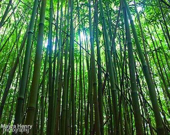 Bamboo Photography, Wall Art, Trees, Home Decor, Maui, Hawaii, Green