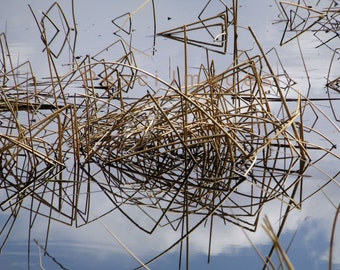 Reed Reflections #1