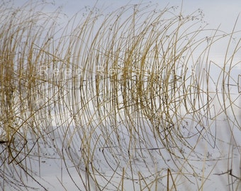 Reed Reflections #23