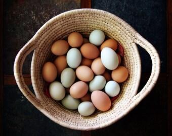 Egg Basket Photograph Print art