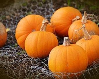 Pumpkin Delight Fragrance Oil