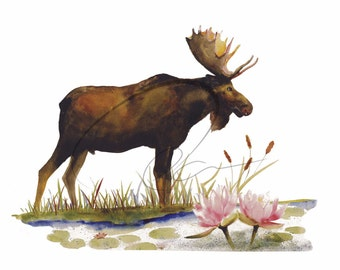 Gentle Giant - Fine Art Watercolor Print Moose Waterlilies Flowers Wildlife Available in Paper and Canvas by Olga Cuttell