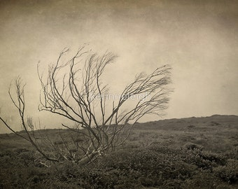 Trees - Selection of 5 Blank photo cards, Black birds, Gothic, Crows, Greeting Cards