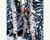 On Sale Winter Landscape,  Birch Trees, Bird, Red Cardinal, Landscape, Photograph, A Winter's Song, 8x10 archival Giclee print
